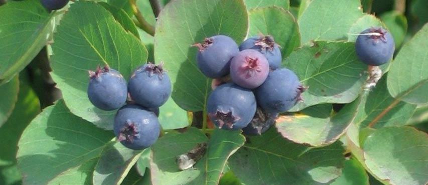 Purchase plants in bulk